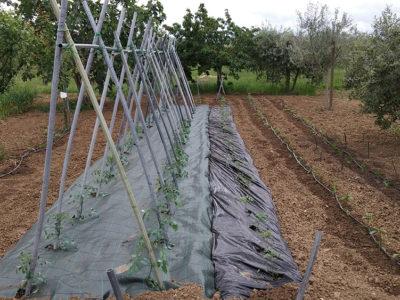 collemancio-agricola-angelucci-2