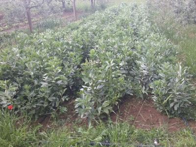 collemancio-agricola-angelucci-4