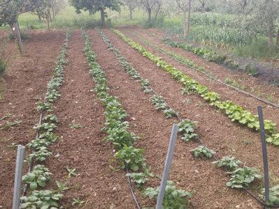 collemancio-agricola-angelucci-7